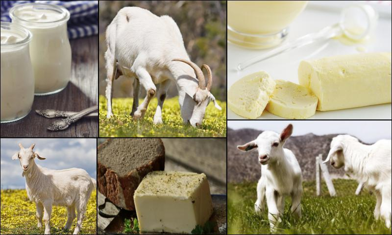 Günlük Doğal Süt Satışları Nasıl Yapılıyor
