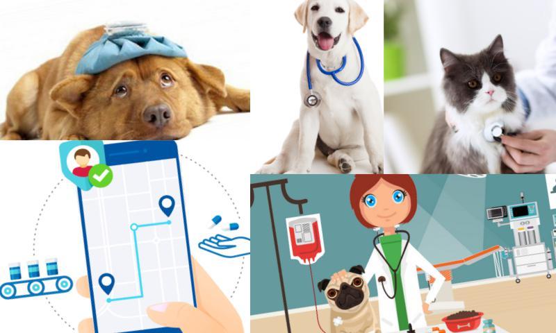 Veteriner Klinik Yönetim Uygulaması