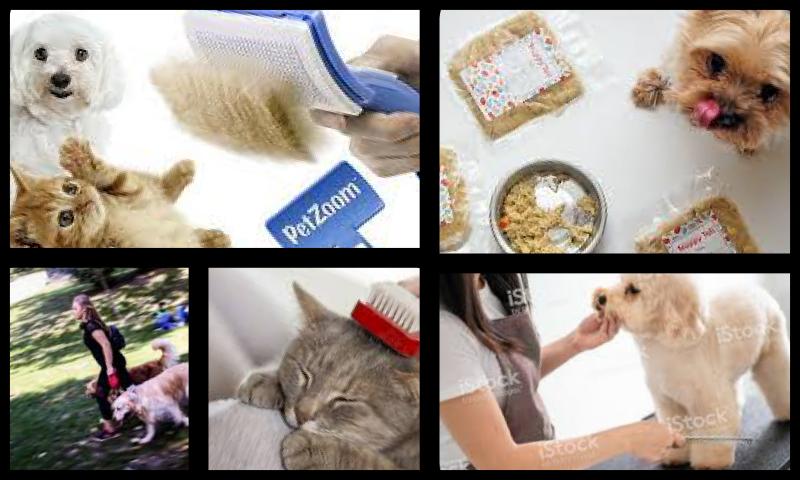 Evde Hayvan Bakımı Konusunda Yaşanan Sorunlar